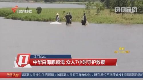 江門臺山 中華白海豚擱淺 眾人7小時守護救援