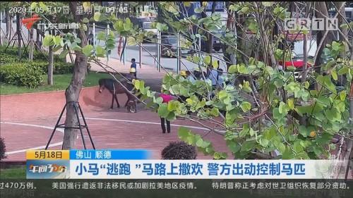 """佛山顺德:小马""""逃跑""""马路上撒欢 警方出动控制马匹"""