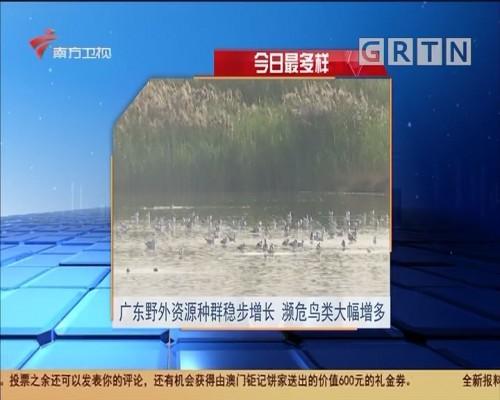 今日最多样 广东野外资源种群稳步增长 濒危鸟类大幅增多