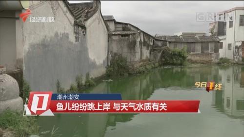 潮州潮安 魚兒紛紛跳上岸 與天氣水質有關