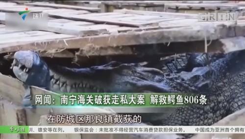 网闻:南宁海关破获走私大案 解救鳄鱼806条