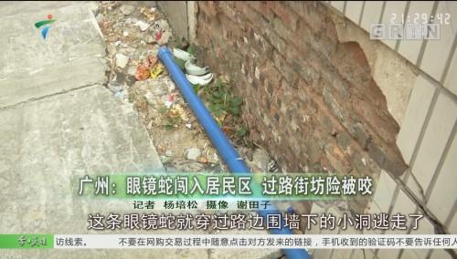 广州:眼镜蛇闯入居民区 过路街坊险被咬