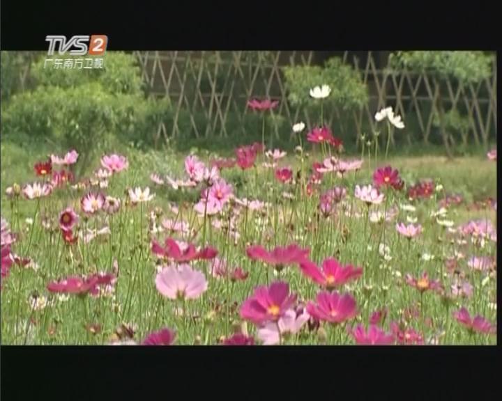 20170415《潮流假期》广东踏青之旅 1