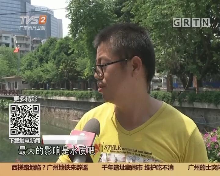 广州天河:河涌大量死鱼 点解?