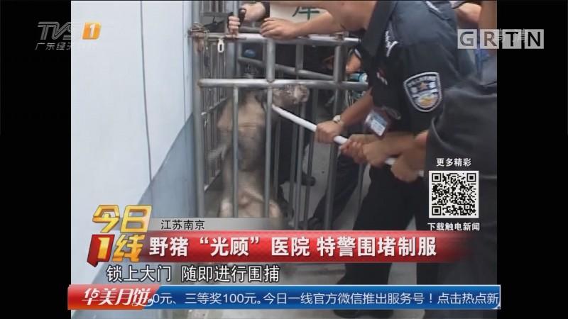 """江苏南京:野猪""""光顾""""医院 特警围堵制服"""