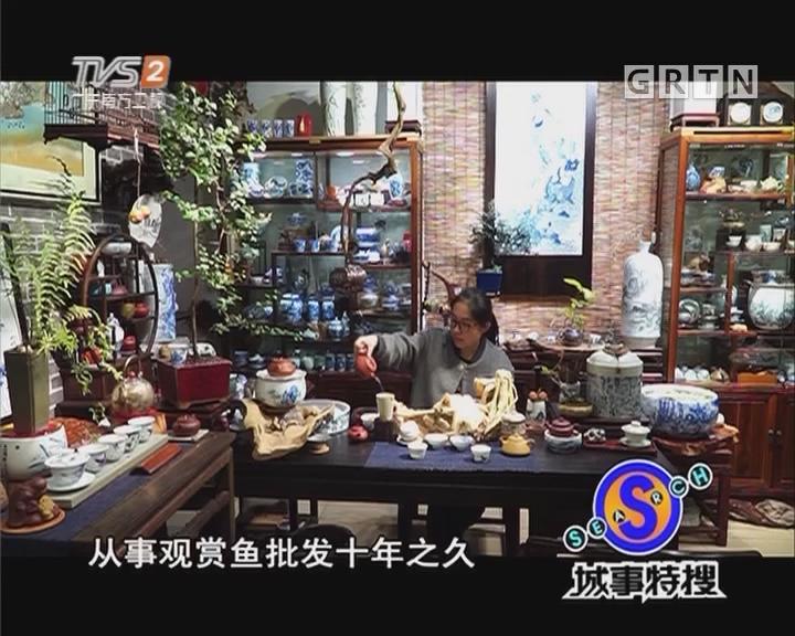 广州财富故事:花鸟鱼虫市场