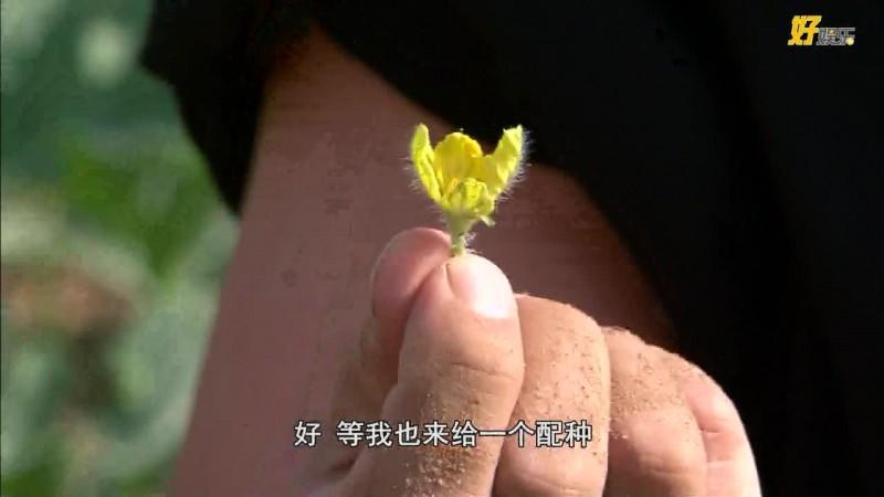 《食匀全中国》4-1.mp4
