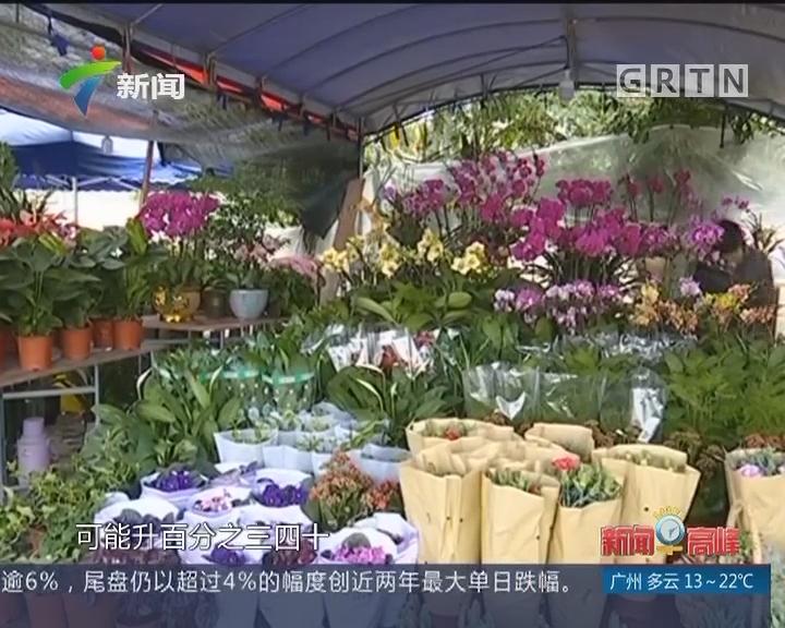百花迎新春 节前花卉市场渐升温