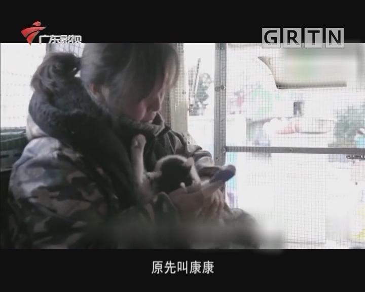 胡艳萍和猫咪的流浪王国