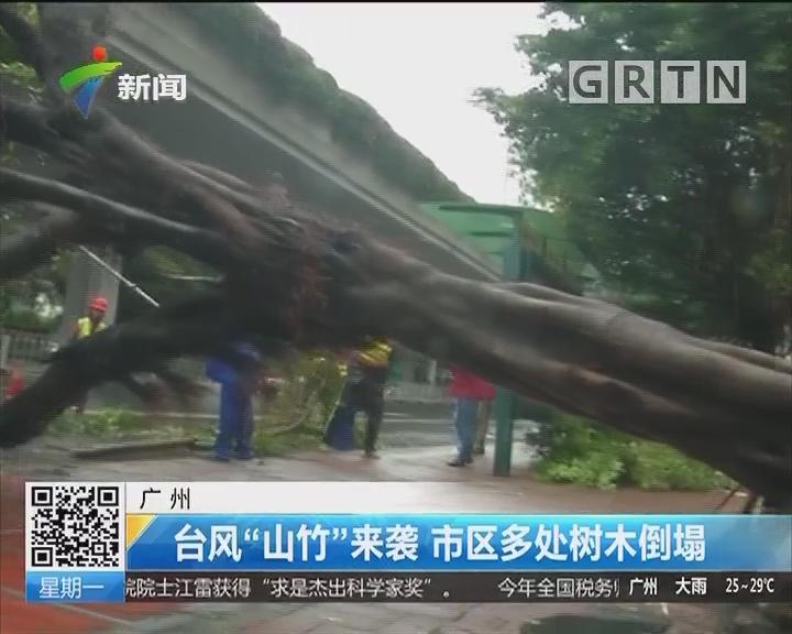 """广州:台风""""山竹""""来袭 市区多处树木倒塌"""