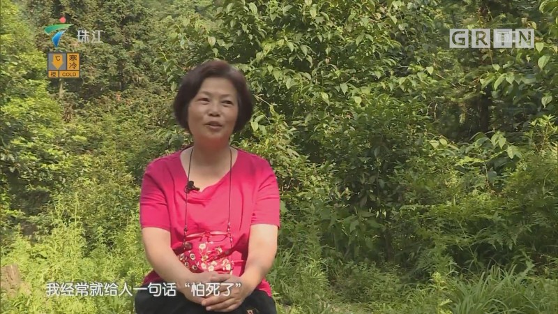 "[HD][2018-12-31]摇钱树:深山里的""火凤凰"""