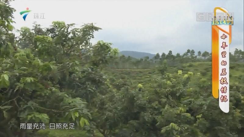 [HD][2019-06-17]摇钱树:小年里的荔枝情怀