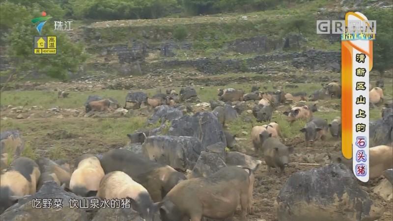 [HD][2019-07-08]摇钱树:清新区山上的石头猪