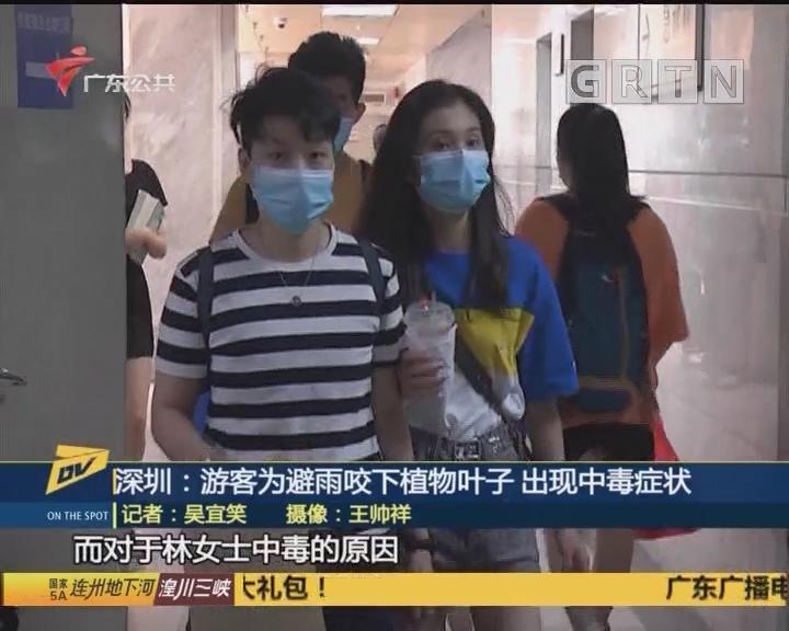 深圳:游客为避雨咬下植物叶子 出现中毒症状
