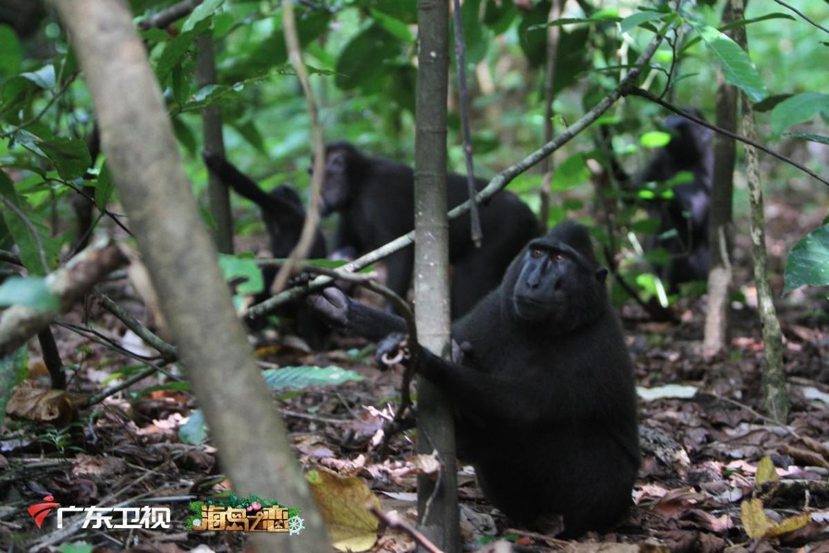 《海岛之恋》走进美娜多热带雨林,原生态美景震撼人心