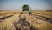 农业农村经济高质量发展开局良好(经济形势年中看)
