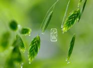 明日谷雨| 雨生百谷 遇见最美暮春色