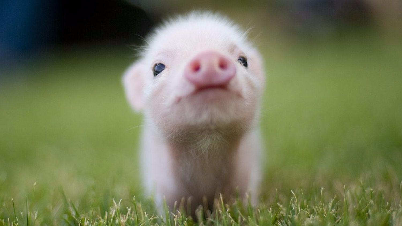 """一头""""猪""""拱掉梅州市8县31官员"""