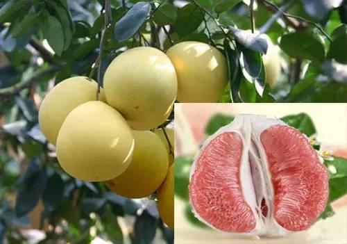 如何挑个好吃的梅州蜜柚?最全攻略请收好!