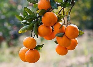 梅州人看完这条会摘很多个橘子压压惊