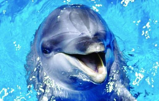 广州正佳极地海洋世界:保护动物组织抗议圈养致动物