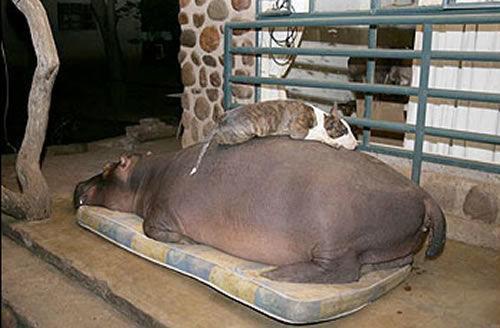 养只大型动物是一种怎样的体验?