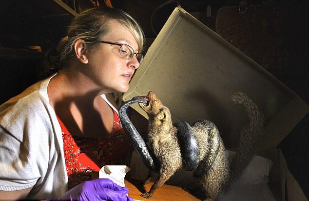 英博物馆展出奇特走私品 旨在保护动物