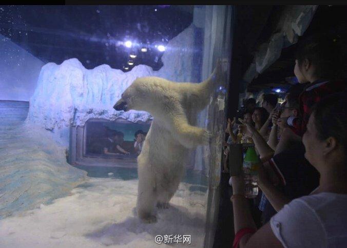 """世界上""""最悲伤北极熊"""" 高温天商场内""""接客"""""""