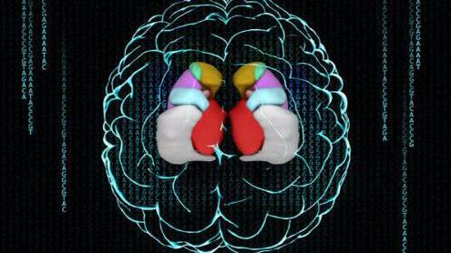 """用""""条形码""""标记大脑,感觉未来科技已经到来了"""