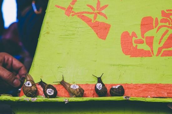 西班牙举办蜗牛赛跑 一米赛冠军耗时6分22秒