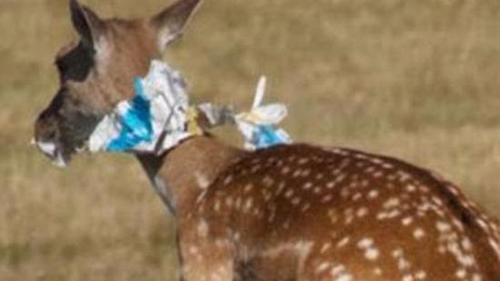 英国自行车选手乱扔能量胶包装 被指害死多只鹿