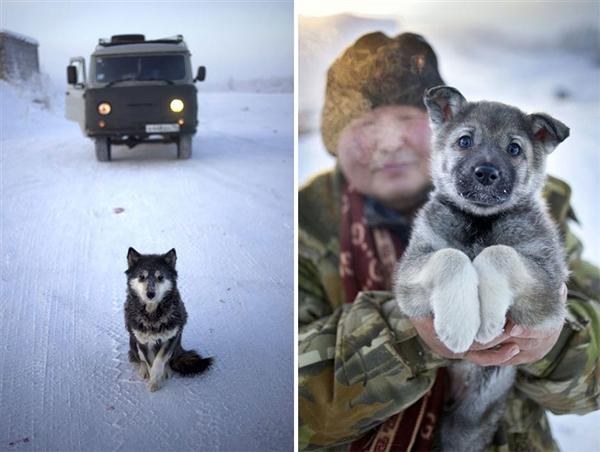 摄影师拍世界最冷村庄,跪了!