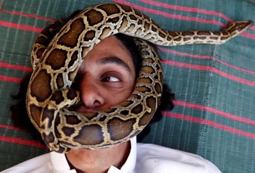 """人蛇""""亲密接触"""":养蛇男让大蛇在脸上爬动(图)"""
