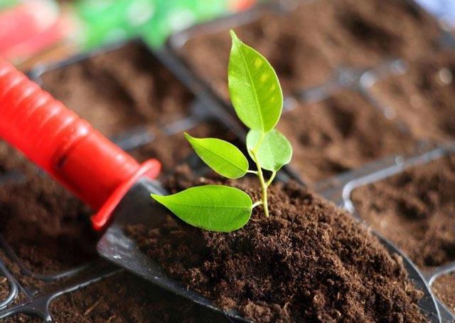 中科院成功研制土壤修复新材料 每亩成本不超30元