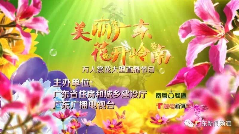 3月4日上午11点,广东新闻频道邀您一起来赏花!