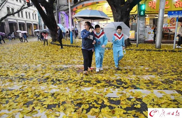 """一场春雨之后,广州遍地""""黄金"""""""