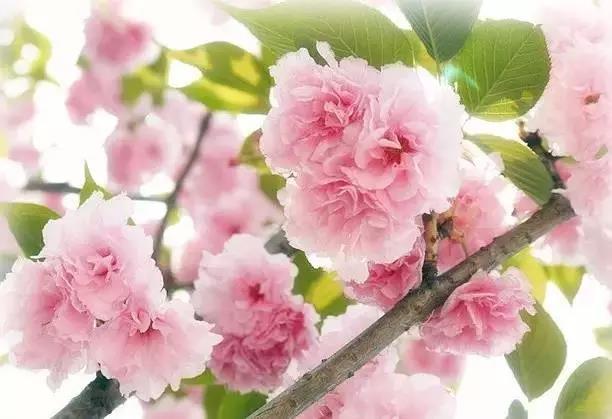 烟花3月,来广州赴一场芳香之约
