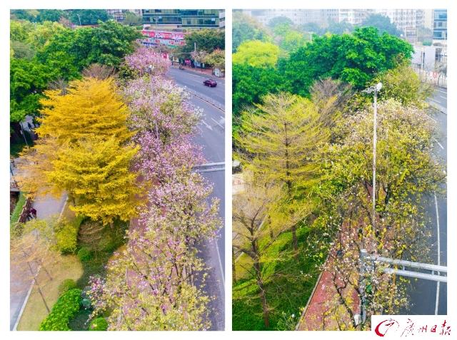 春雨过后花落尽 嫩叶抽芽满眼新绿