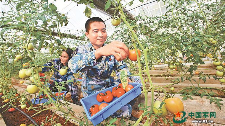 西沙岛礁蔬菜生产旺季自给率可达70%以上