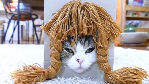 萌!日本猫咪试戴各种假发 博客浏览量破世界纪录