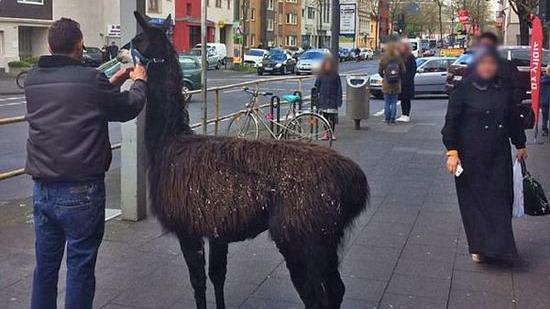 德动物园14只动物集体出逃 横冲马路致严重破坏