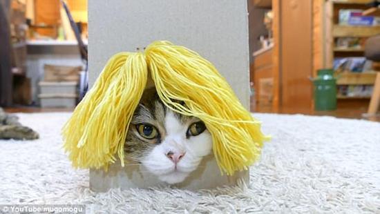 萌翻!日猫咪试戴各种假发塑造百变发型