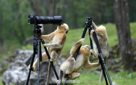 大圣,给我拍张照吧!