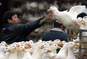广州扩大活禽交易限制区