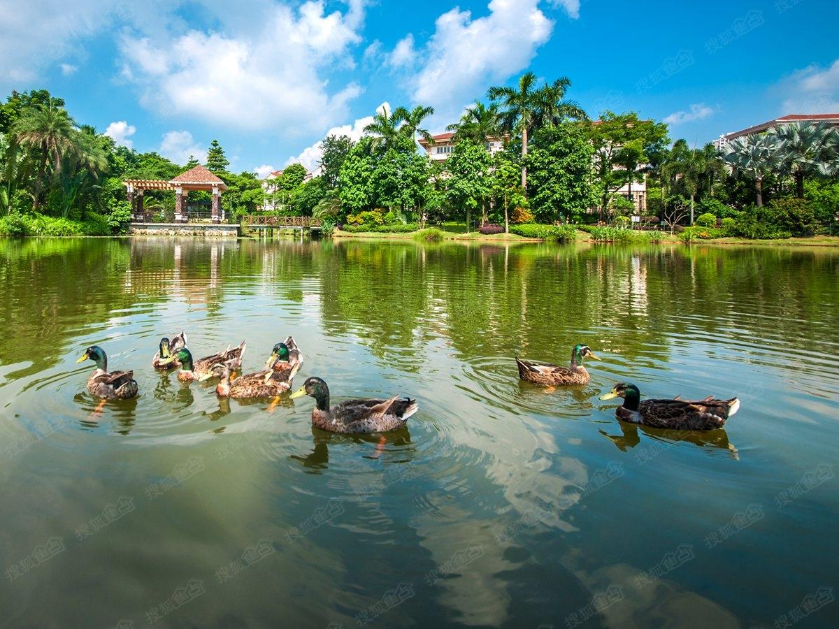 广州写好生态文明建设大文章 东南西北青山绿水都是好环境