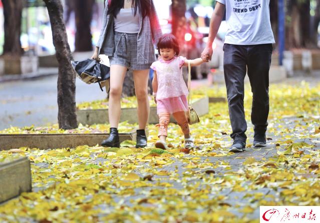 广州暴雨扫落满地黄金叶