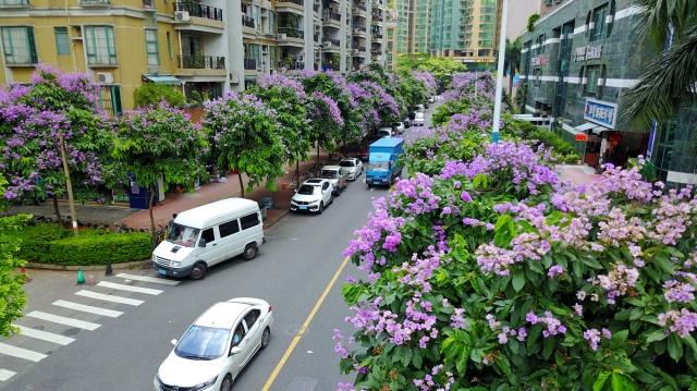 紫薇花扮靓盛夏时节 处处好街景