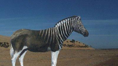 你知道斑驴吗?它正在