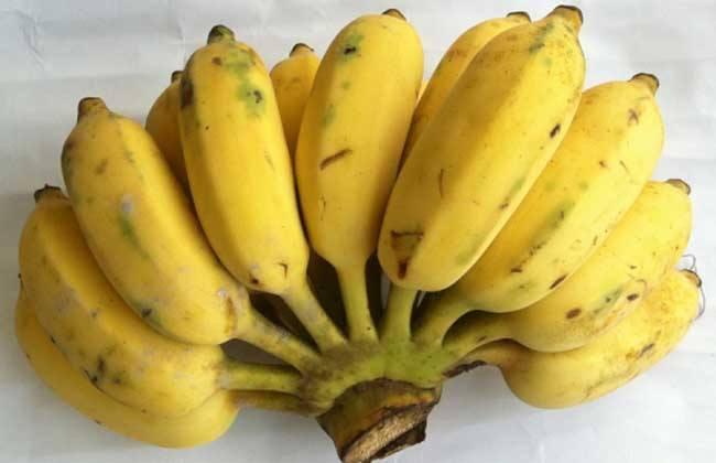 女童吃芭蕉卡喉身亡 其父母起诉赠芭蕉老人索赔73万图片