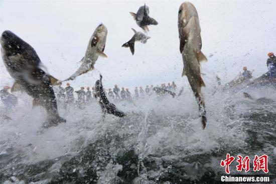 """浙江千岛湖畔再现""""巨网捕鱼"""" 万鱼起跃堪称盛景"""